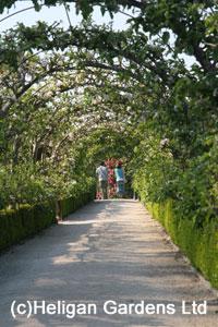 Heligan Gardens Apple Arches