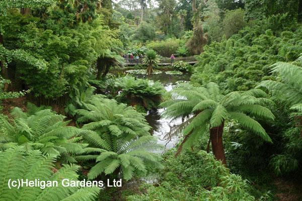 Heligan Gardens Jungle Ariel