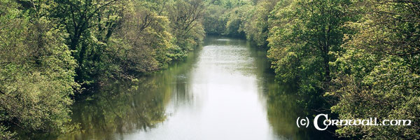 River Tamar from Gunnislake bridge